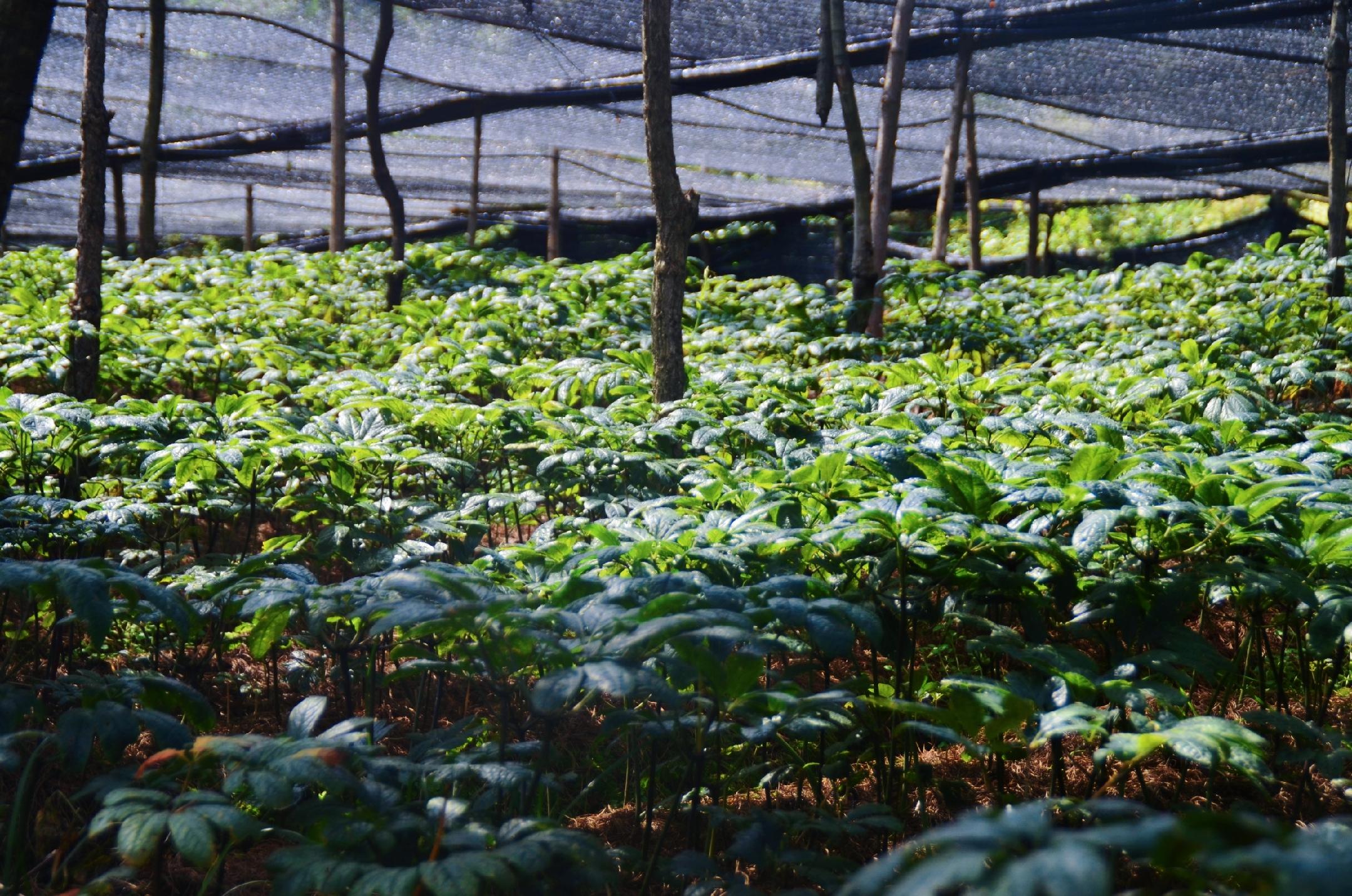 汇丰神农百科:打造林下经济标杆企业