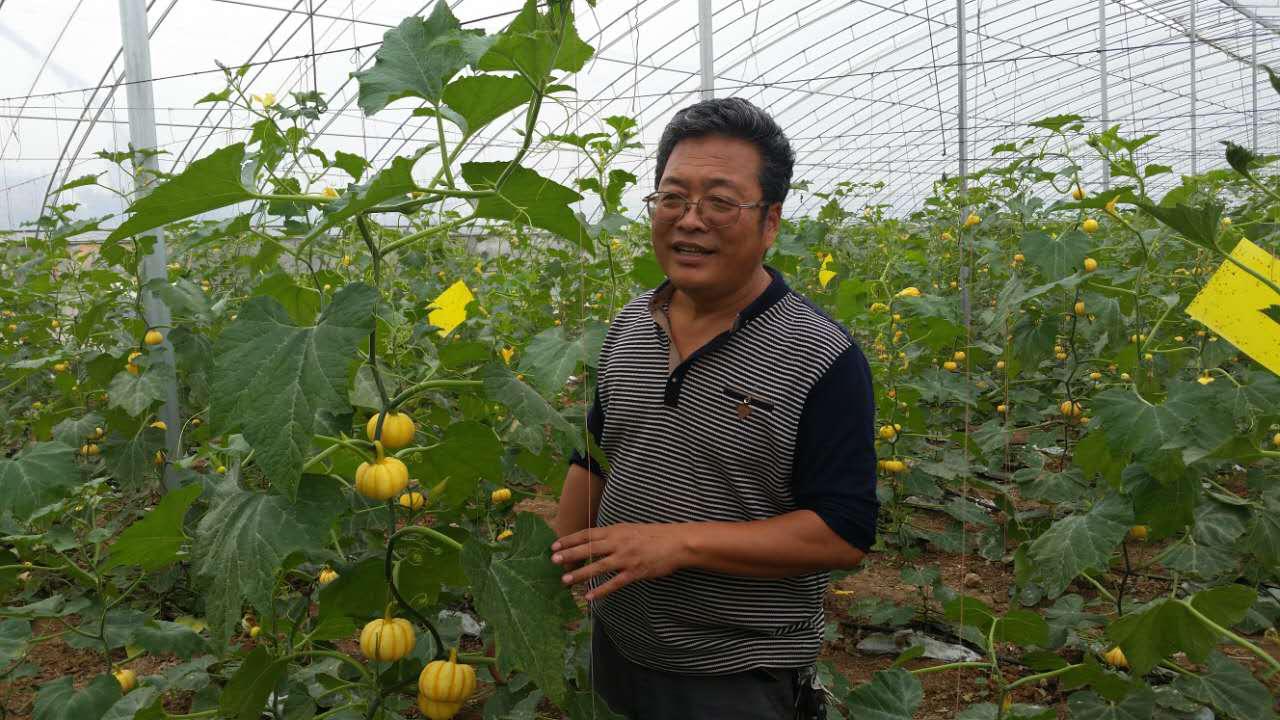 盟员马新世精心培育新品种,推广新技术, 被评为陕西省首届十佳职业农民