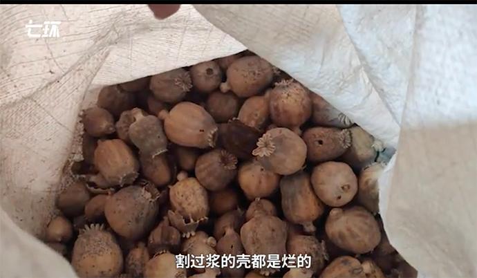 安国市一个药材商给拿出小半袋罂粟壳。