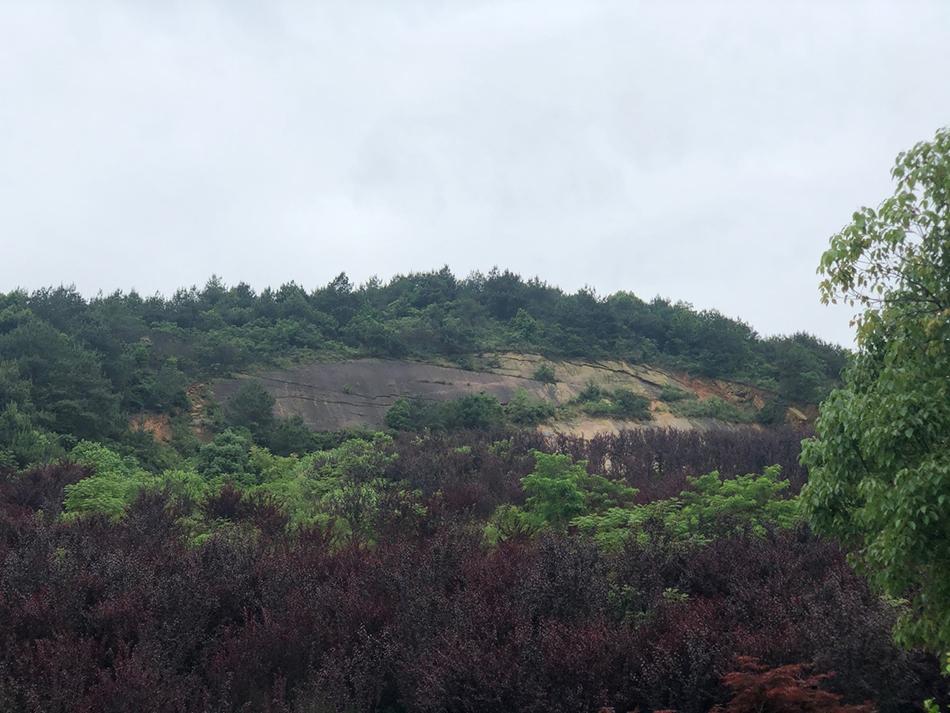 如今的马驿山矿区已经被植被覆盖