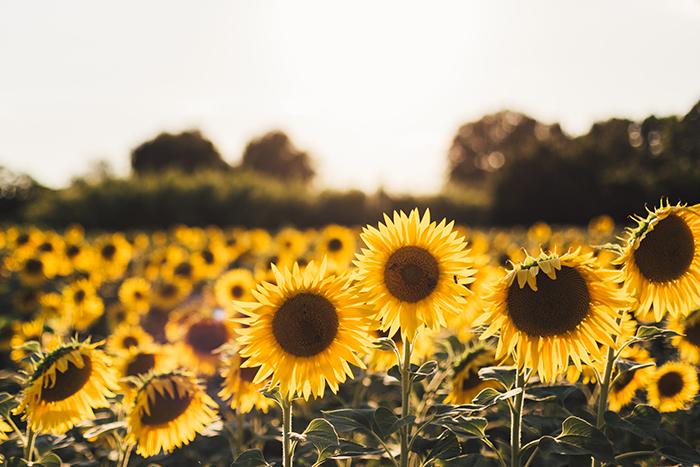 心若向阳,处处都是阳光.jpg